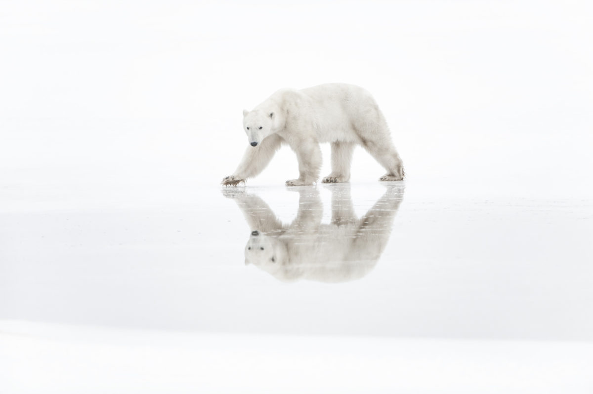 Espace des Mondes Polaires – Exposition photographique «Arctique»